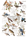 Redesign decor transfers postal birds 24x35 into 3 sheets